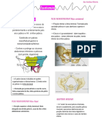 Anatomia (pelve óssa)