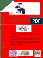 INTELIGENCIA, ORGANIZACIÓN CEREBRAL Y LA LECTURA COMPRENSIVA(PRESENTACIONES)