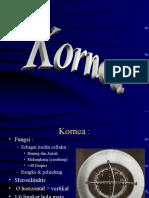 2 - Kornea