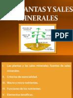 Las plantas y las sales minerales. pdf