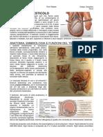 (7) Urologia 29-3-21