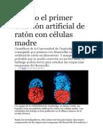 BIOLOGÍA.primer Embrion Celulas Madre Raton