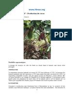 Fiche technique n°07 - Production du cacao