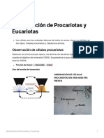 Identificacin_de_Procariotas_y_Eucariotas