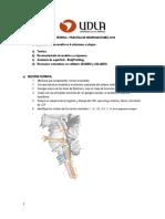 Guia Practica Neuroanatomia 201320