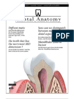 Dental Anatomy - Lecture 5