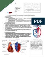 TEMA 1 Anatomia funcional del sist. CV