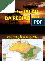 A VEGETAÇÃO DA REGIÃO SUL