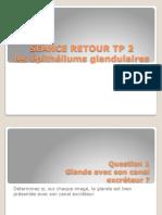 TP2 glandes
