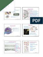 Estrucutra Cromatina y Cromosomas