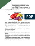 1ro psicología