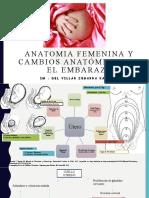 AF Cambios Anatómicos en el embarazo k
