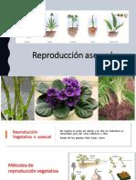 Ejemplificación Práctica 11 - Reproducción asexual