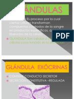 _Glándulas(2)