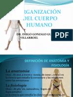 ORGANIZACION CUERPO HUMANO 1