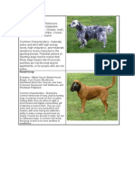 The Seven Major Dog Groups