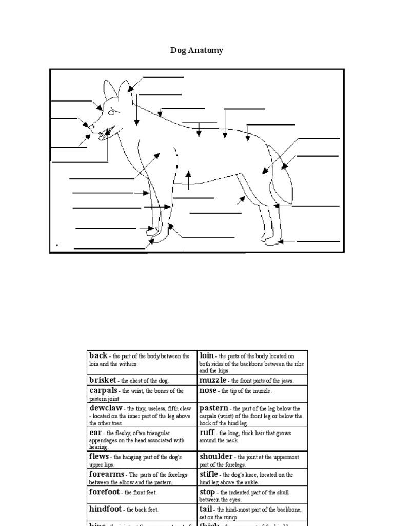 Dog Anatomy Worksheet
