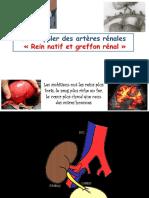 greffon renal presentation