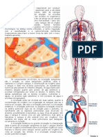 Sistema Circulatório Ilustrado