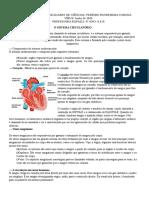 8º-Ano-A-e-B-Ciência-O-Sistema-Circulatório-Junho-de-2020-Profª-Rafaeli
