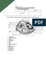 AP-IIIºMEDIOS-BIOLOGIA-MOLECULAR-Y-CELULAR_SOLUCIONARIO-GUIA-Nº1