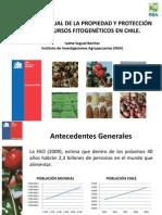 Situación actual de la propiedad y protección de los recursos fitogenéticos en Chile (PowerPoint)