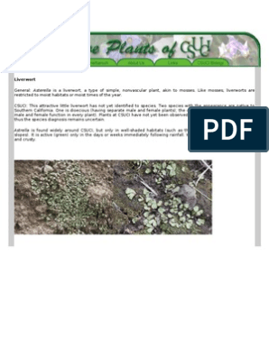 Asterella | Moss | Plants