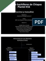 patologias de organos reproductores