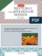 ESTRUCTURA YMORFOLOGIA DE HONGOS