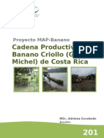 CP de banano criollo