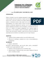 Lab Morfologia y anatomia de la raíz (1)
