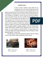 Rapport de Metallurgie La Corrosion Seche