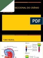 Anatomia Seccional Por Tomografia