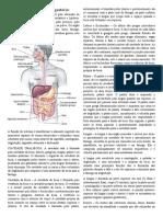 Anatomia - Sistema Digestório