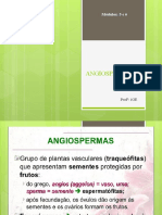 Angiospermas Nova