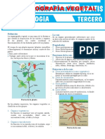 Organografía-Vegetal-para-Tercer-Grado-de-Secundaria-convertido