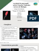 Grupo D_Ctenophora