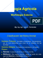 Morfología Externa  2021.ppt