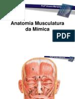 c2eec9535ad7b8b7c979aa6b55b9088c-AULA-3-ANATOMIA-MUSCULATURA-DA-M--MICA