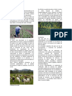 ACTIVIDADES ECONOMICAS DE GUATEMALA COMPLETO