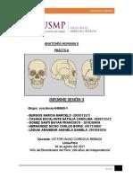 Informe Anatomía Humana II sesión 3-convertido