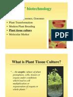 Plant%20tissue