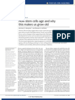 How stem cells age and why