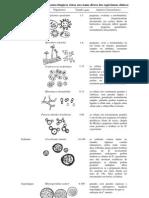 Característica dos elementos fúngicos vistos em exame direto dos espécimens clínicos