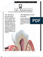 Dental Anatomy Lecture 7