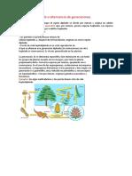 Ciclo Haplodiploide o Alternancia de Generaciones