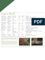 08464-fragrant-shrubs