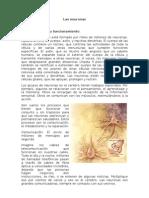 Las neuronas y su funcionamiento2