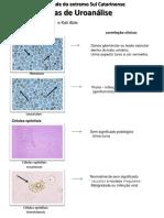 Atlas de Uroanálise PDF