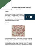 fisiologia hematies de policitemia